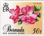 bermuda_05