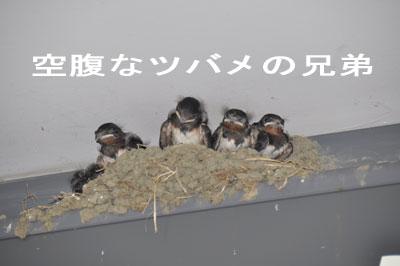 100620_01