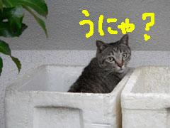 050708_cat1