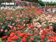 photo_mn6